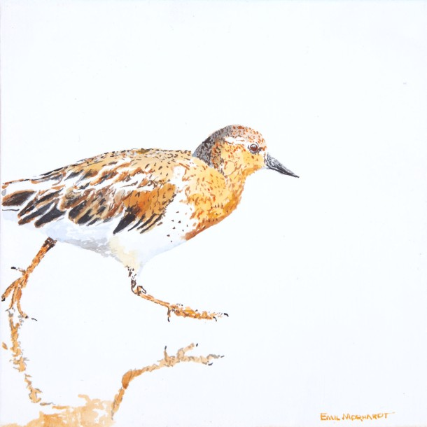 "Black Turnstone #4, 8"" x 8"" acrylic on canvas SOLD"