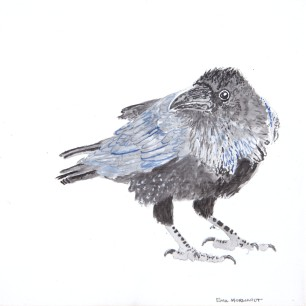 "Common Raven #4, 8"" x 8"" acrylic on canvas $150"