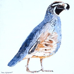 "California Quail #1, 8"" x 8"" Acrylic on canvas.SOLD"
