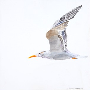 "Royal Tern #5, 8"" x 8"" Acrylic on canvas. $150"