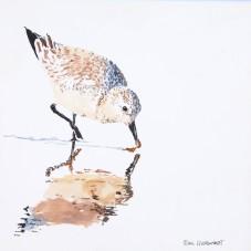 Sanderling #23