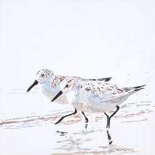 Sanderlings #22
