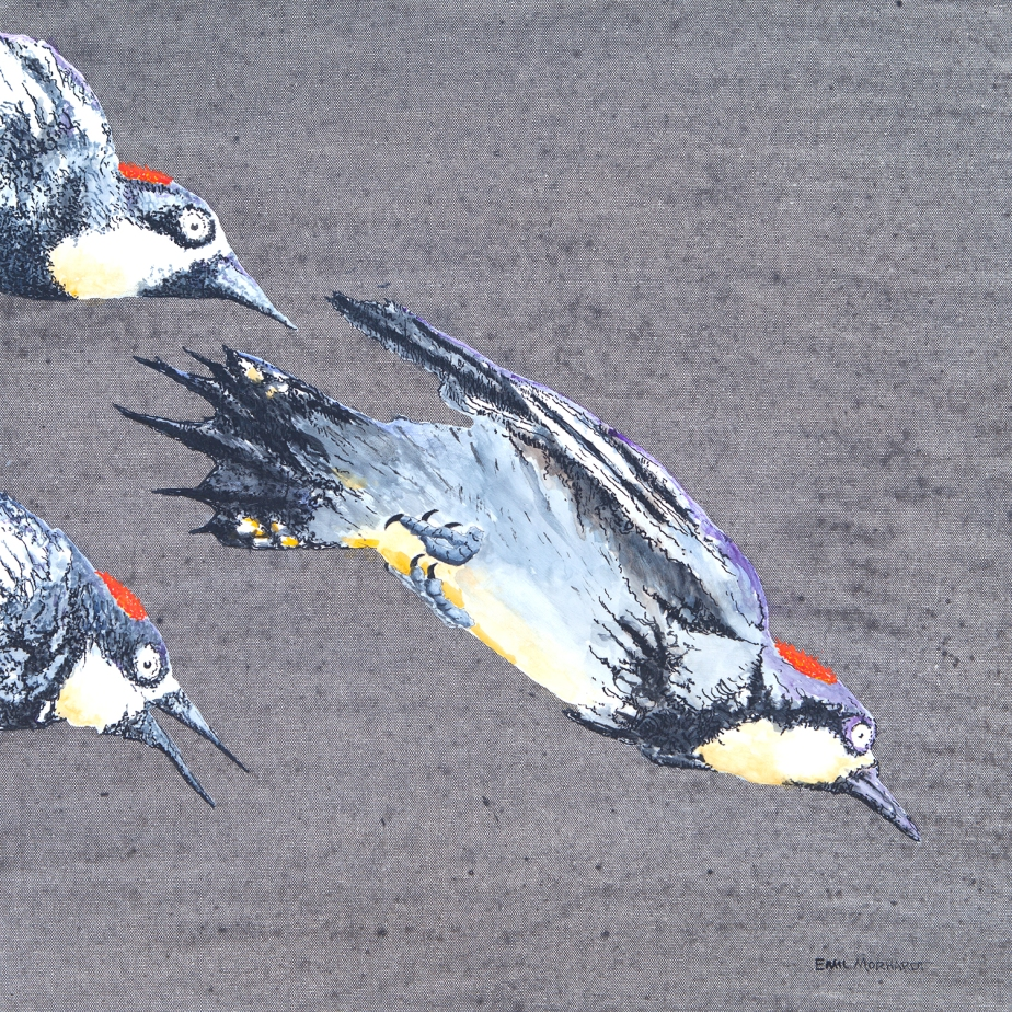 Image of a painting of three Acorn Woodpeckers diving against a gray background.