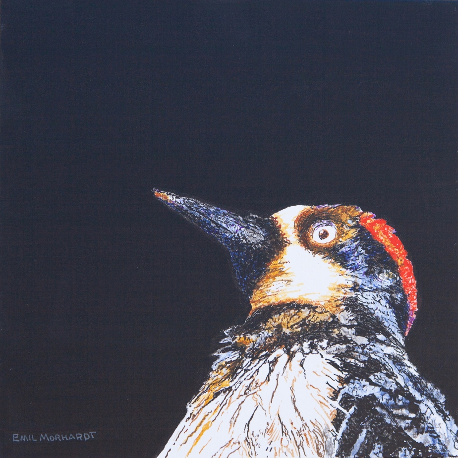 Image of a painting of an Acorn Woodpecker peering up from the right lower corner of the canvas, against a black background.