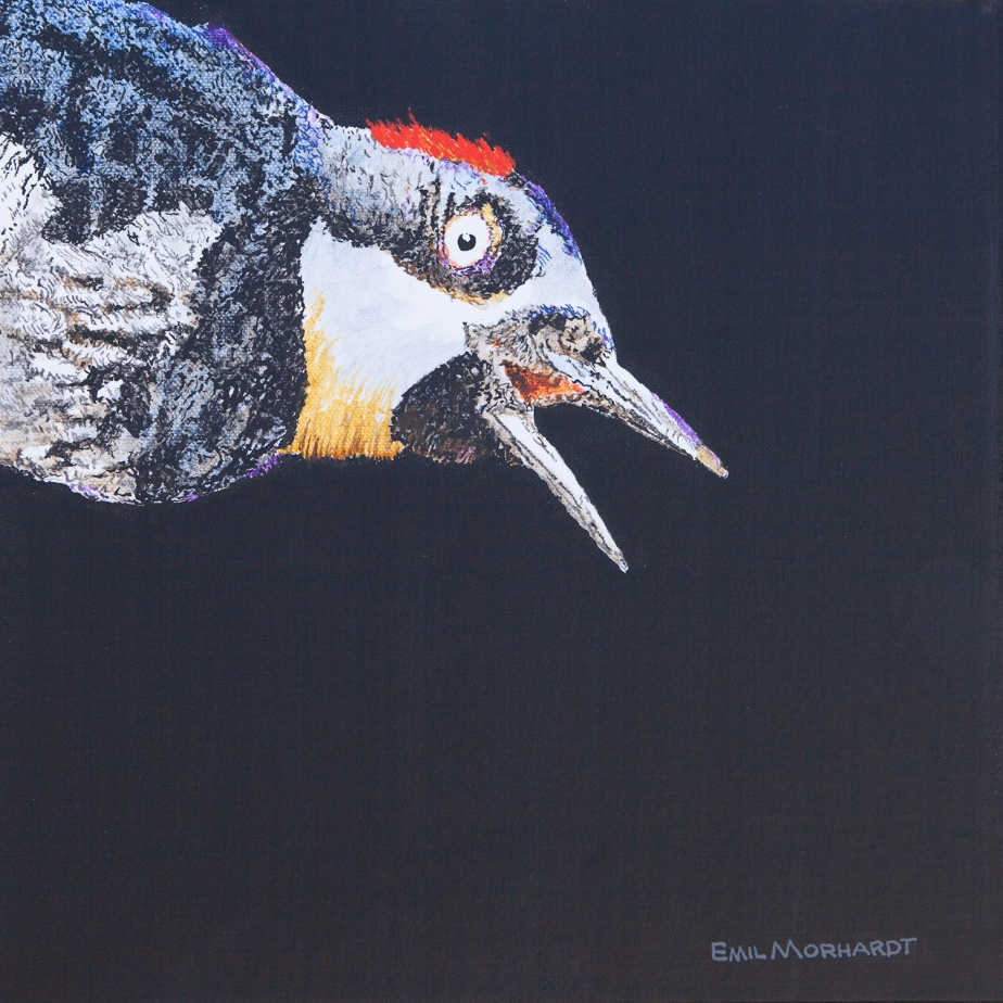 Image of a painting of an Acorn Woodpecker diving into the upper left corner of the canvas, against a black background.