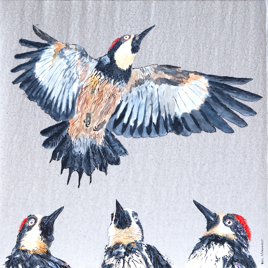 Image of a painting of three Acorn Woodpeckers admiring the vertical flight of a fourth