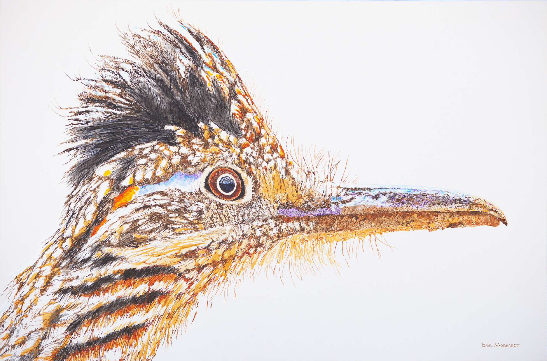 Image of a painting of a Greater Roadrrunner with a white background.